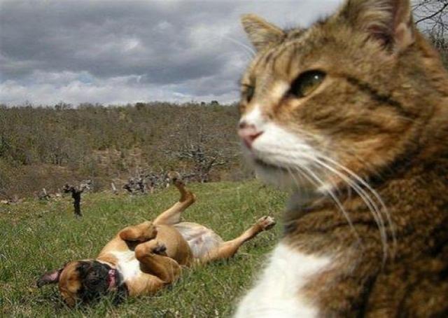 Стою в поле, задумчиво смотрю вдаль... Нет, серьёзным это фото не получилось.