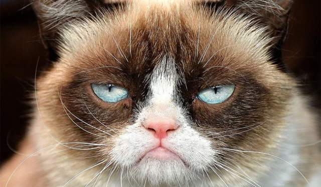 Grumpy cat. Кошка из Лос-Анжелеса стала известна всему миру благодаря недовольному выражению мордочки. Многие пользователи поначалу даже предполагали, что добиться такого можно лишь с помощью Фотошопа.