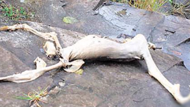 В нескольких сотнях километров к югу, в Панаме. В одной деревне четвертовав подростков рассказали взрослым, что обнаружили странное существо, которое выбежало из пещеры. По словам мальчиков, монстр их начал преследовать и дети стали кидать в него камнями пока не убили, а затем выкинули тело в воду.