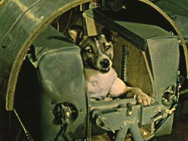 """Первым живым существом, выведенным на орбиту на советском корабле """"Спутник-2"""" 3 ноября 1957 года, стала собака Лайка. Это был первый обитаемый объект на орбите. Совершив несколько витков Лайка погибла от перегрева в апогее орбиты."""