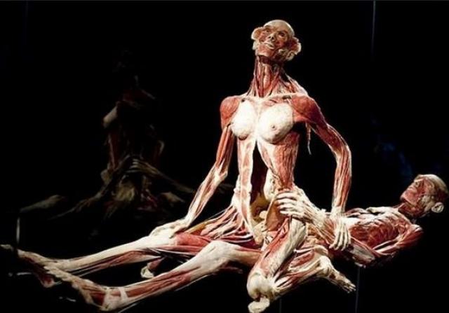 Именно человеческие останки и стали материалом для создания так называемых пластиноидов.
