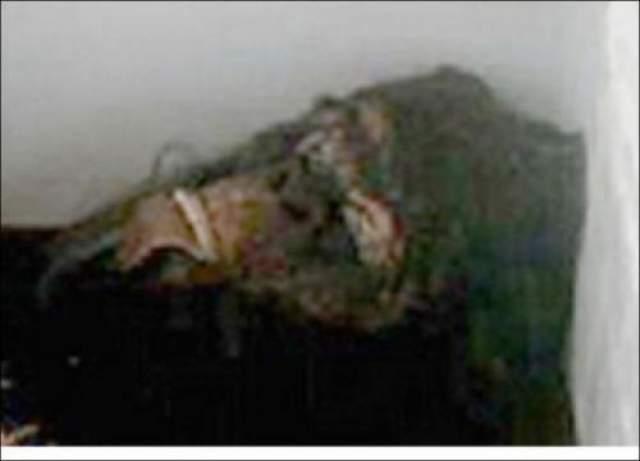 """При ближайшем рассмотрении, однако, выяснилось, что """"труп бигфута"""" - всего лишь резиновый костюм гориллы. тем не менее, мистификация удалась на славу: сенсационную новость о йети не перепечатал только ленивый, а фотографии резиновой гориллы в холодильнике всплывают до сих пор в качестве иллюстрации к статьям про снежного человека."""