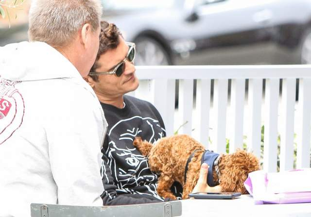 А собачка породы кавапу и не против того, что ее хозяйка осталась в дружеских отношениях с бывшим возлюбленным - так ему достается вдвое больше любви, прогулок, косточек и веселья!