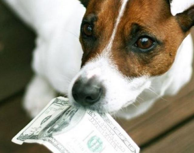 Владельцем самого большого состояния, завещанного животному , стал кинопродюсер Роджер Доркас. Богач оставил все свои 65 миллионов долларов своему любимому псу Максимилиану. Согласно завещанию жена продюсера получала всего лишь 1 цент.