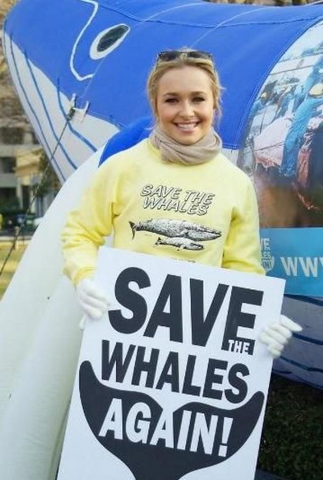 """Хайден Панеттьери. Звезда сериала """"Герои"""" и """"Нэшвилл"""" и подруга Владимира Кличко была частью группы протестующих из США и Австралии, которые на досках для серфинга 30 октября 2007 года приплыли к бухте возле Тайцзи на юго-западе Японии, чтобы сорвать ежегодный забой японскими рыбаками китов и дельфинов."""