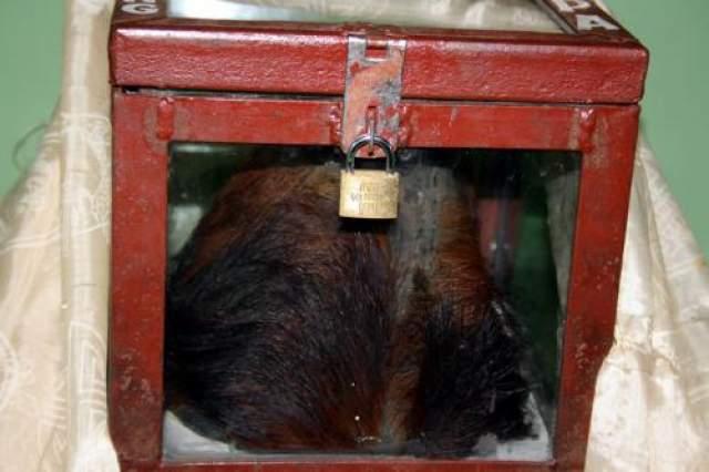 По записям членов экспедиции, виденный ими скальп вряд ли мог принадлежать кому-либо известному животному или человеку.