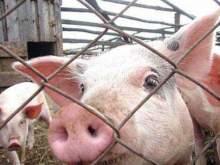 Россия пригрозила выходом из ВТО из-за иска Евросоюза на $1,4 млрд за запрет на ввоз свинины