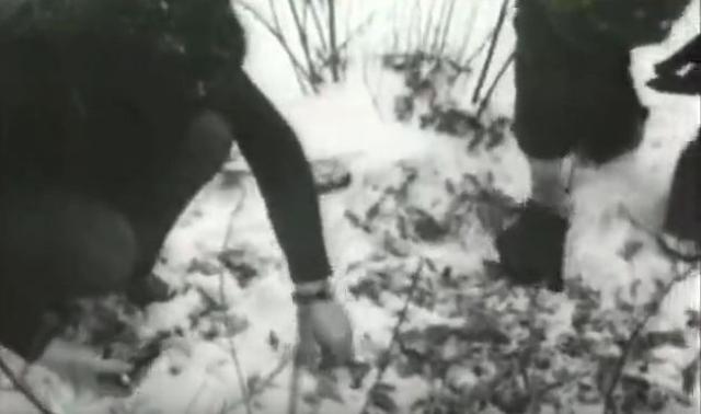 Брежневу доложили об этих взрывах, он немедленно потребовал от председателя КГБ Андропова и министра МВД Щелокова немедленно найти преступников. На поиски преступников были брошены лучшие силы прокуратуры, МВД и КГБ СССР, о ходе следствия регулярно докладывали лично Брежневу.