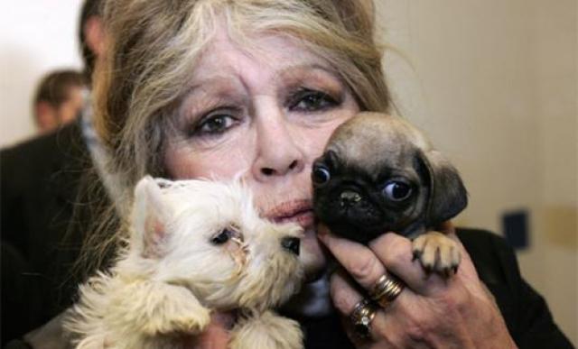 Под покровительством Бардо находятся не только редкие и вымирающие виды, но и бездомные собаки и кошки, для которых она открывает приюты. В 1986 году Брижит распродала на аукционе свои драгоценности и личные вещи и открыла собственный фонд.