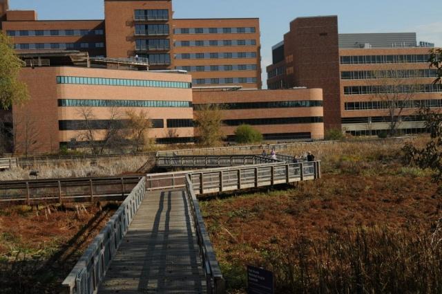 Здоровая почка. В Миннесоте, пациентке госпиталя Park Nicollet Methodist Hospital удалили здоровую почку вместо той, на которой была раковая опухоль, и удалили ее даже после проверки.