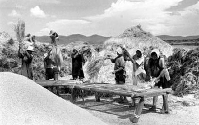 По подсчетам китайского научно-исследовательского института зоологии, от воробьев за год терялся такой объем зерна, которого бы хватило, чтобы прокормить 35 миллионов человек.