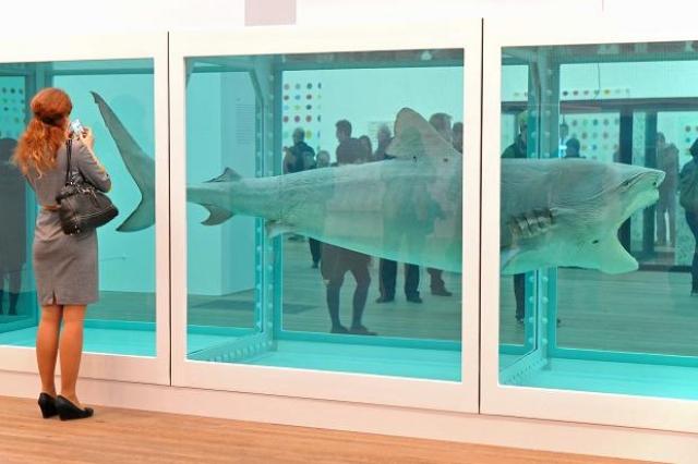 Данный шедевр представляет собой четырехметровую тигровую акулу в аквариуме с формалином.