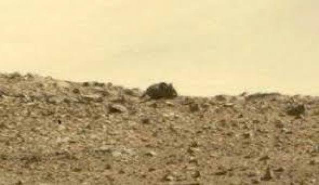 """На этом снимке с Марса виртуальные археологи заметили """"гигантскую мышь""""."""