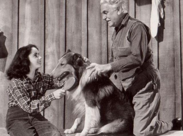 Хозяин отказался от него и продал его за 5 долларов. Новый друг решил рискнуть и показать собаку на кинопробах, и не зря.