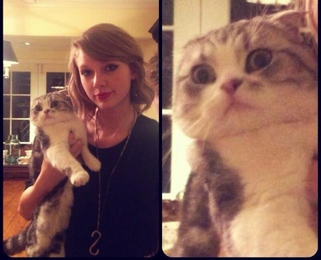 """Кошка породы скоттиш-фолд сайт развлекательной телесети E! Entertainment Television назвал """"лучшим из того, что есть в поп-культуре""""."""