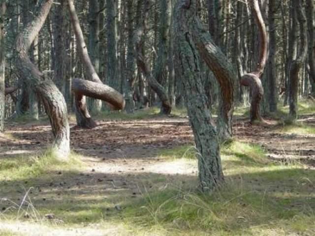 Хотя Бачу По мнению многих людей, это место является самым таинственным в мире, потому как именно здесь, в Трансильвании, происходите множество необъяснимых, жутких историй. Одно только то, что деревья в этом месте переплетаются между собой в странные узлы создает ощущение сцены из фильма ужасов.