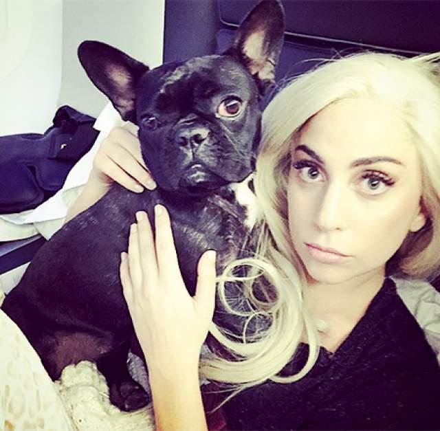 У питомицы есть свой Инстаграм, на котором 239 тыс. подписчиков, и для поступка есть повод. У собаки в 2015 году появилась личная жизнь и карьера - она стала лицом новой рекламной кампании сумок Coach.