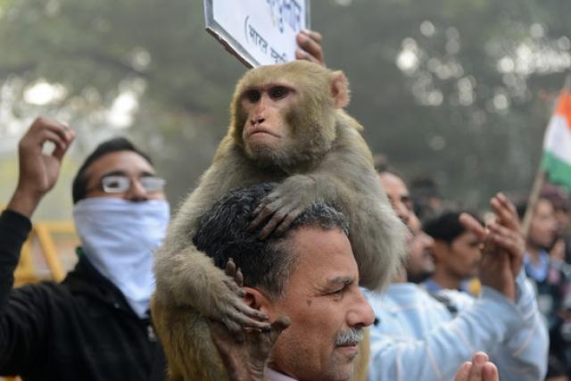 Во время визита в Индию вице-президент посетил мемориал лидера индийского освободительного движения Махатмы Ганди. За несколько минут до того, как Байден со своей супругой и с внучкой Ганди должны были позировать перед фотографами, макаки обрушили на американского гостя град из плодов манго. В результате официальная церемония едва не была сорвана.