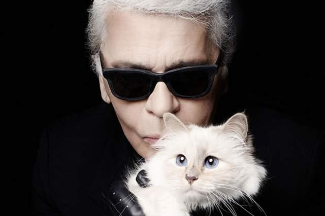 Кошка Шупетт - питомец Карла Лагерфельда. Пушистая красавица не просто радует глаз своего знаменитого хозяина, но и является его главной музой.