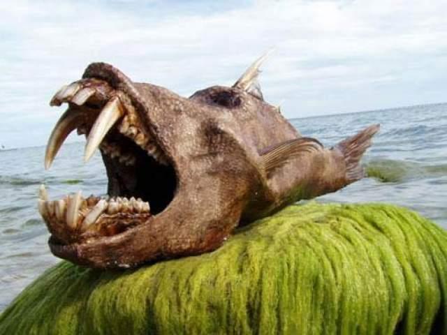 Время от времени журналисты заявляют, что на престижном пляже одного из островов найдено очередное удивительное чудовище.
