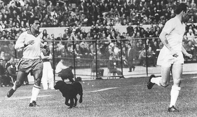 Во время игры против Англии в ЧМ-1962 на стадион выскочила дворняжка. Англичанин Джимми Гривз поймал ее, встав на четвереньки, а та тут же справила на него нужду. Гарринчу так позабавил этот случай, что он приютил собаку.