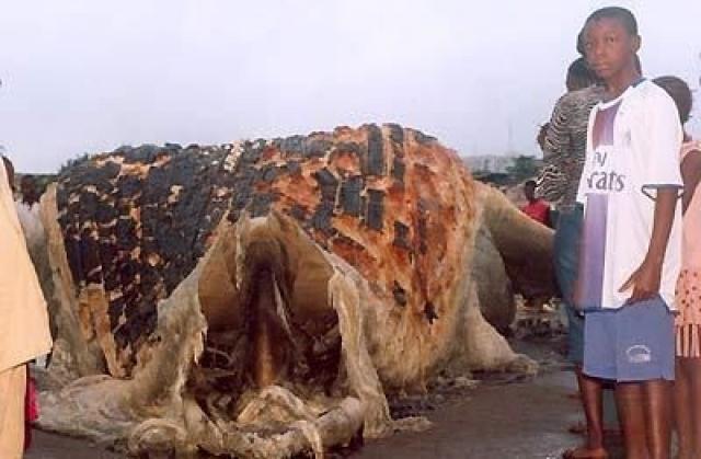 Мертвого монстра выбросило на берег во время шторма.