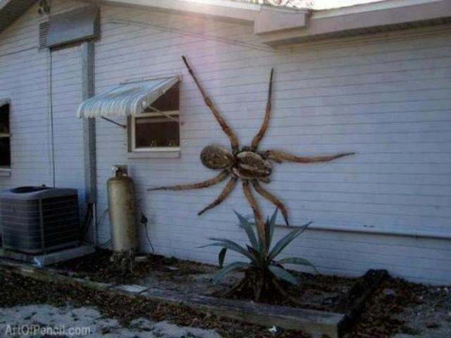 Гигантский паук из Анголы. Фотография якобы самого большого в мире паука.