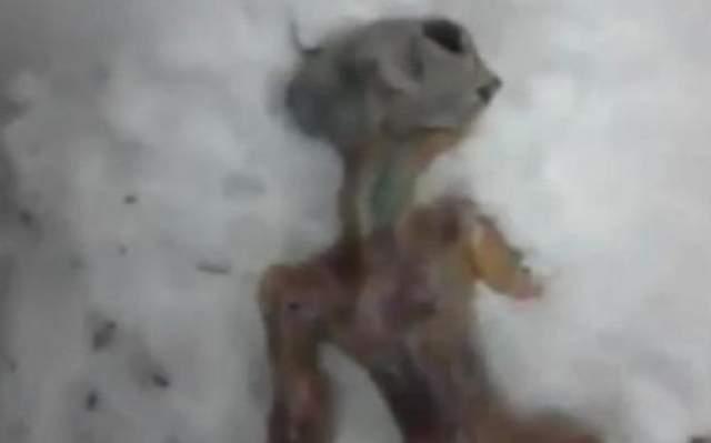 """Пришелец из хлебного мякиша В апреле 2011 два человека уверяли, что нашли тело инопланетного существа в снегу в Сибири. Они утверждали, что тело получило подтверждения, когда в соседнем Иркутске потерпел крушение летательный аппарат инопланетного происхождения. В итоге """"инопланетянин"""" оказался сделанным из хлебного мякиша, обтянутого куриной кожей."""