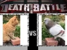 Видео дружеской потасовки кота с голубем набирает популярность в Сети