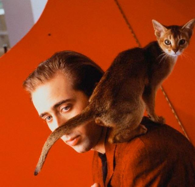 Николас Кейдж - обладатель породистого кота Льюиса.