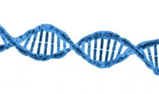 """Генная инженерия В своей знаменитой антиутопии """"О дивный новый мир"""" Олдос Хаксли дал яркое описание генной инженерии. Уровня, описанного в книге, сегодняшняя наука пока не достигла, хотя первые генетические манипуляции начались еще в 1972 году."""
