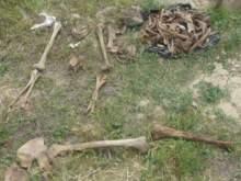 В Крыму нашли забитые обезглавленными скелетами рвы
