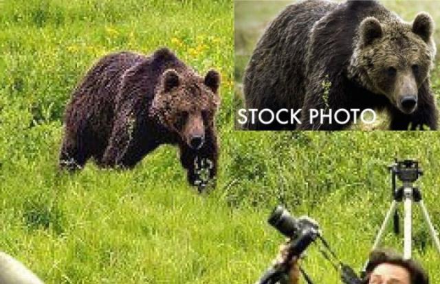 При увеличении изображения животного сразу заметны следы фотомонтажа. А если немного поискать в интернете, можно даже найти оригинальное стоковое фото, с которого этого медведя и вырезали.