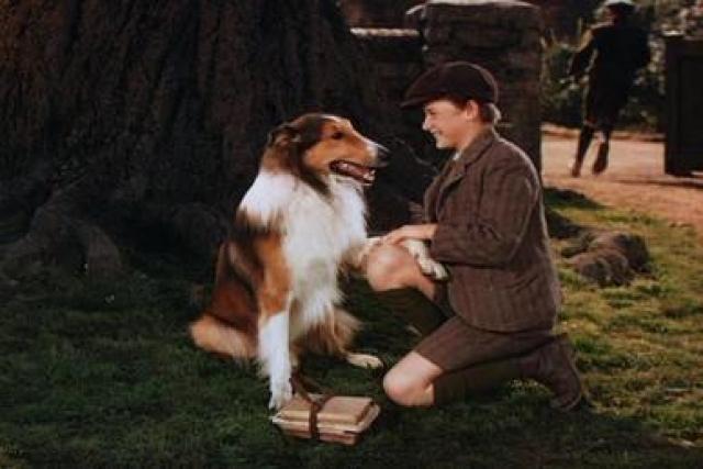 """Все """"Лесси"""" были кобелями, поскольку колли-девочки чаще линяют, что могло помешать съемкам. Роль в первых семи фильмах, снятых в 40-х годах, исполнил колли Пэл."""