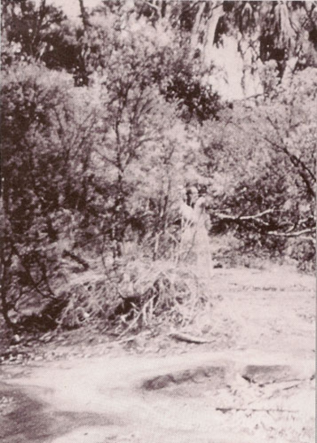 Фото было сделано неподалеку от Элис Спрингс, Австралия, в 1959 году. Полупрозрачная женская фигура на переднем плане не может быть следствием использования двойной экспозиции, как утверждают эксперты.