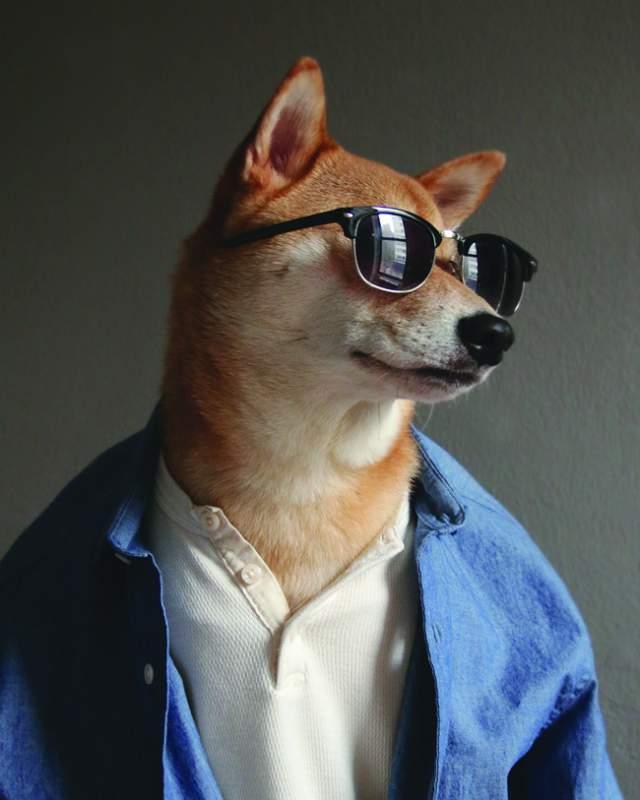 """Хозяева пса даже выпустили книгу """"Thenewclassic"""", а MenswearDog, как Бодхи зовется в Интернете, собрал сотни тысяч подписчиков в Инстаграме, на Фейсбуке и в Tumblr."""