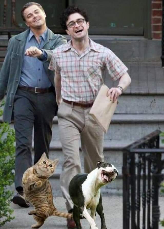 Также веселый Лео хорошо смотрится с веселым Дэниелом Рэдклиффом и веселыми животными.