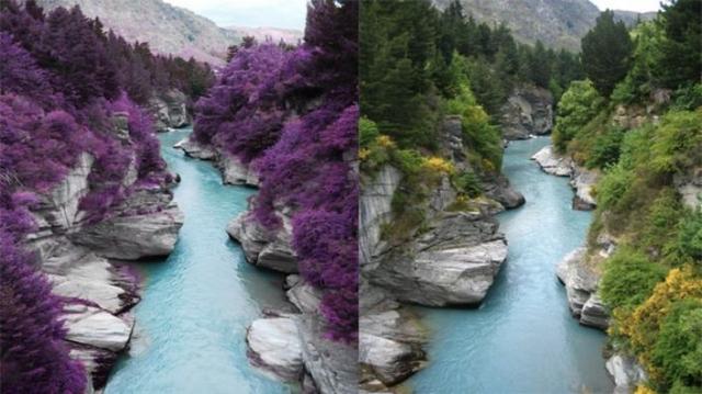 Фиолетовые леса в Шотландии. Это просто отредактированный в Фотошопе снимок реки Шотовер в Новой Зеландии.