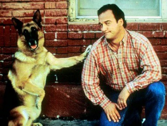 Совместно с напарником, офицером Паттерсоном, Котон совершил более 24 задержаний преступников. А в начале ноября 1991 года пес стал настоящим героем, когда обнаружил более 10 кг кокаина на сумму более 1,2 миллионов долларов.