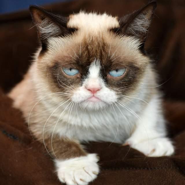 """Самая сердитая кошка в мире в 2013 году победила в номинации """"Мем года"""", а уж о том, сколько товаров с ее изображениями можно купить в Сети и говорить не приходится."""