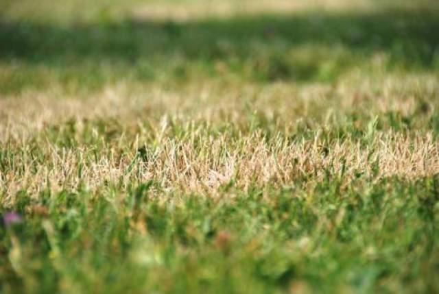 Спустя несколько месяцев, дети Лэнга заметили, что трава на том самом месте, где исчез Лэнг - стала желтого цвета и приобрела форму круга.
