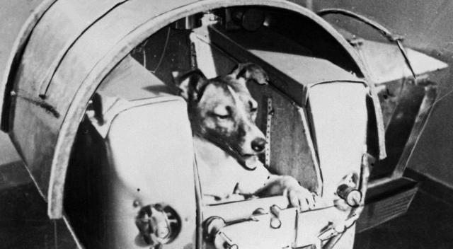 Но до Белки и Стрелки было отправлено еще несколько животных, которые не вернулись обратно. Одна из подопытных собак - Лайка - умерла через несколько часов после старта из-за отказа системы терморегуляции.