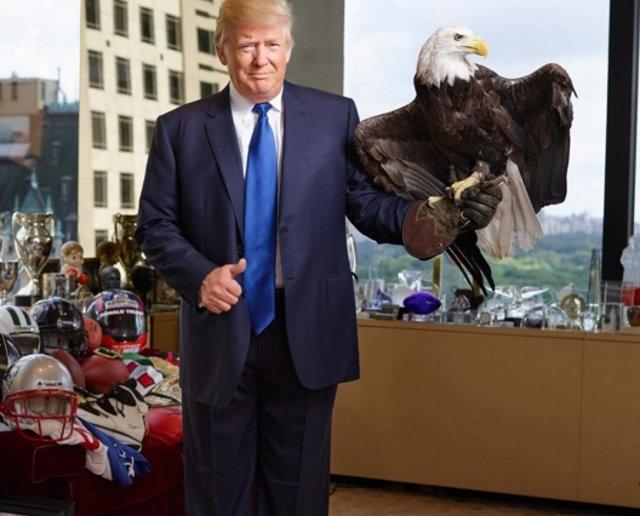 Из последних случаев курьезный инцидент произошел с кандидатом в президенты США Дональдом Трампом. Птицу по кличке Дядя Сэм привезли в офис Трампа для участия в фотосессии для журнала Time. Но очень скоро стало ясно, что птица не хочет видеть Трампа следующим главой государства. Сначала он крылом погладил кандидата по голове, сбив прическу.