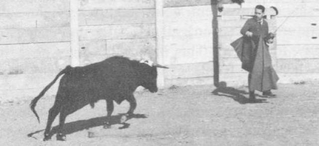 Доктор Хосе Дельгадо вживил в голову быку специальный чип – стимосивер (стимулирующий приемник радиосигналов). Этот чип воздействовал на определенные зоны мозга животного и подавлял его агрессию.