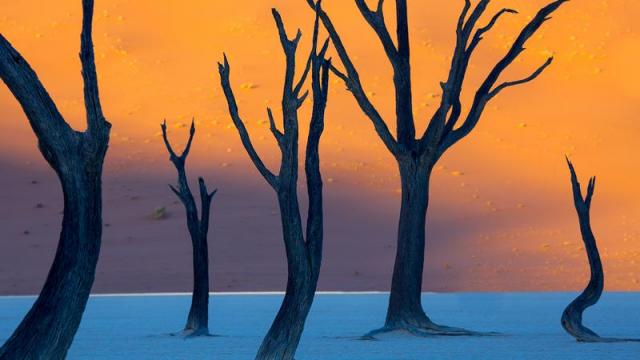 Красные дюны Намибии. Это не картина художника-экспрессиониста. На переднем плане - настоящие сухие, а позади них - красные дюны Намибии.