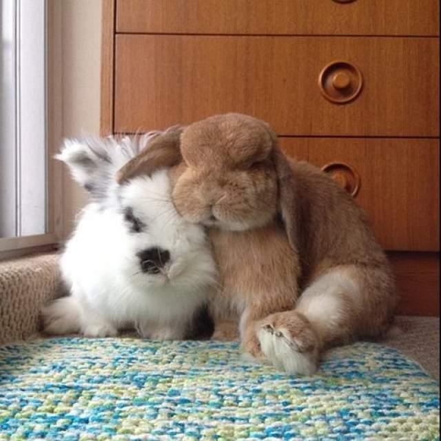 Эди и Рамбо. Хозяева знаменитых кроликов выкладывают их фото за различными занятиями, что привлекло к ним внимание почти миллиона подписчиков в Instagram.