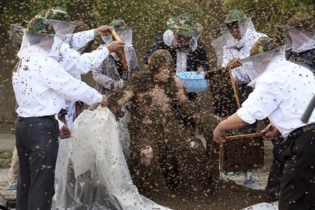 27 мая 2014 года Гао Бинггуо из Тайана, Китай, побил мировой рекорд из знаменитой книги Гиннеса, когда на его теле находилось 326 000 пчёл одновременно.