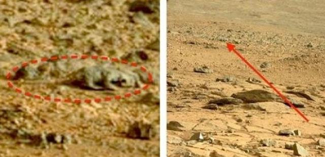 """Рельеф на снимке, сделанном марсоходом """"Curiosity"""", выглядит, как окаменелый скелет ящерицы."""