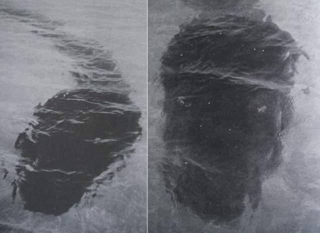 Гигантского головастика длиной 80 футов заметила семья Ла Секкер, однако как только глава семейства решил, что животное мертво, монстр открыл беззубый рот и уплыл.