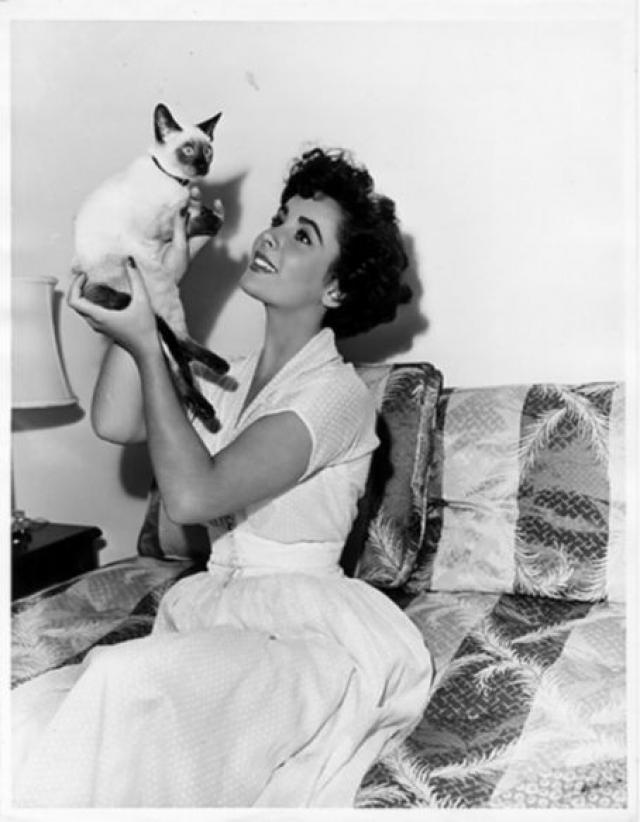 Элизабет Тэйлор. Кошек у актрисы было множество, преимущественно сиамских.